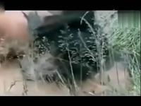 【床戏 吻戏】日本电影《春之雪》激情床戏吻戏
