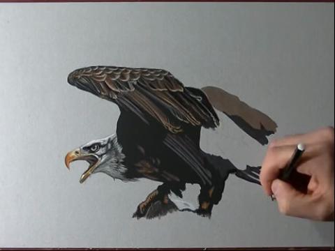 手绘视频教程快速手绘画-如何画写实雄鹰 手绘作品大全