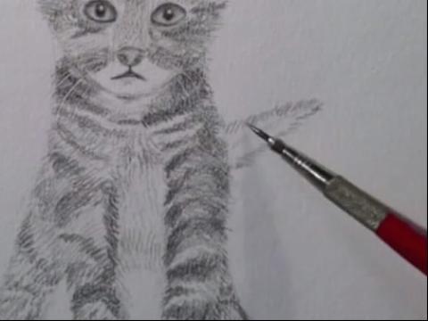 小猫铅笔画