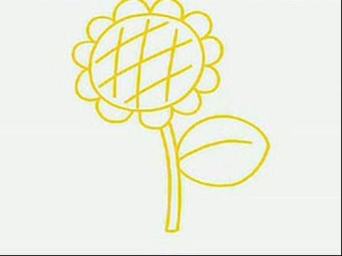 三朵向日葵简笔画内容图片展示
