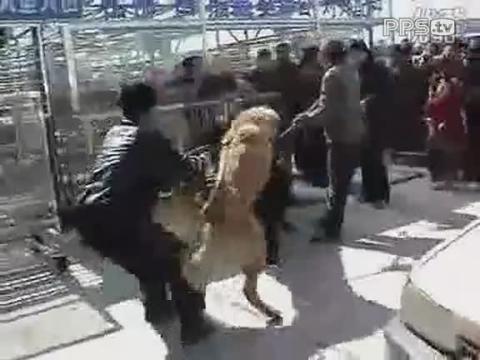 高加索犬视频 高加索犬vs藏獒视频 俄罗斯高加索犬视频