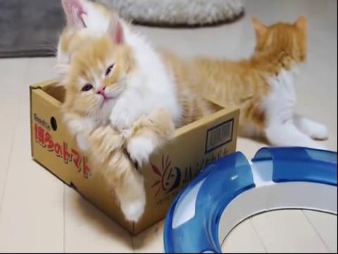 三枚超萌的小猫咪向猫妈妈撒娇