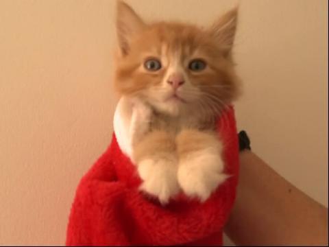 卖萌图片大|僵小鱼图片大全可爱|小猫的图片|猫咪图片大全可爱头像