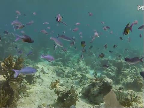 高清美女潜水视频 在线观看
